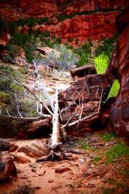 Resurrection Tree 2