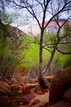 Rocks Tree Spring